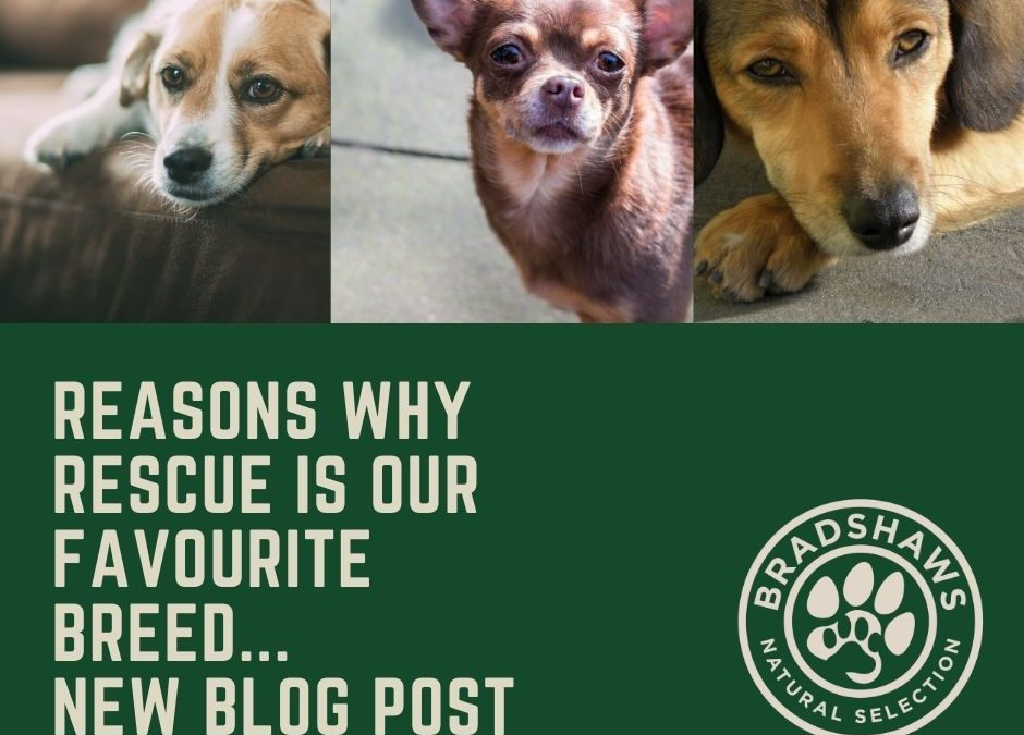 Why rescue is our favourite breed